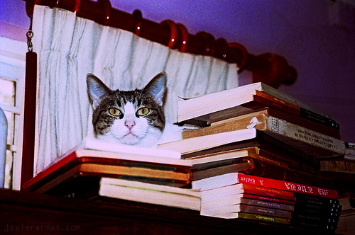 Cat head over bookss